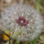 Photographer: Ignace72 Canon EOS 500D  2011-03-24 16:38:05 Copyright:Ignace72 f/9 1/125sec ISO-400 50mm