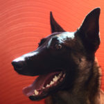 Photographer: Ignace72 Canon EOS 500D  2011-11-09 14:00:28 Copyright:Ignace72 f/3.2 1/50sec ISO-250 50mm